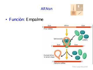 Acidos nucleicos 2 (2).pdf