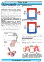 respiratorio.humano.bioresumo.pdf